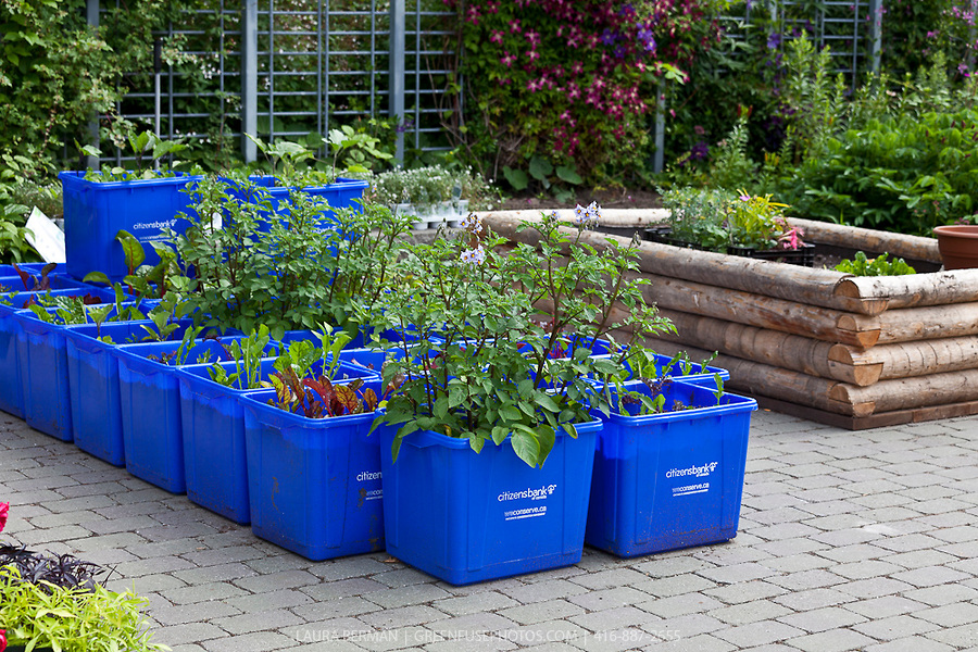 Remember To Always Do This New Container Garden Pots