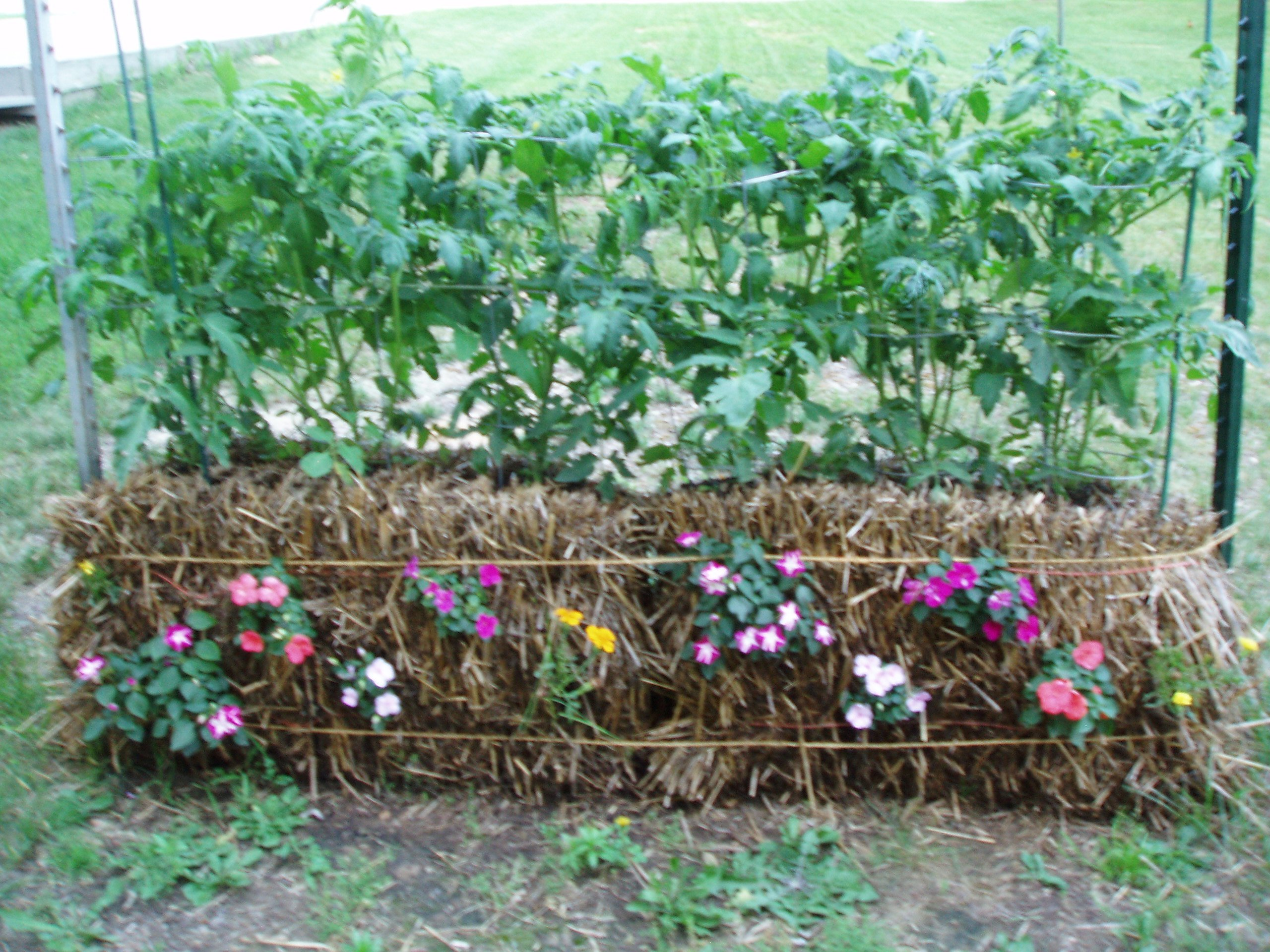 Straw bale gardening how to create an amazing garden Where to buy straw bales for gardening