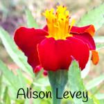 Alison Levey