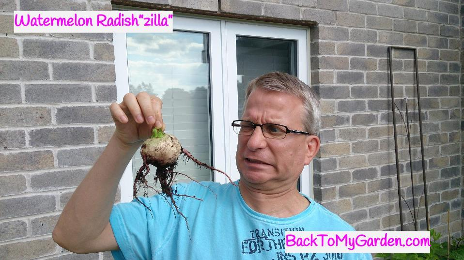 Getting Started With The BackToMyGarden Podcast – Back To My Garden